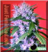 Buy Berry Bomb female Gorilla marijuana seeds Offers UK